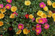 10 Most Beautiful Flowers to Grow in Hanging Basket - EnkiVillage