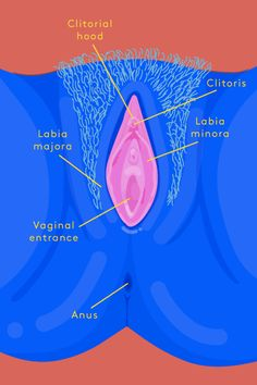 Before you know how to please yourself, you have to be familiar with what's where, especially the clitoris (and its 8,000 nerve endings). Here's a basic refresher. We recommend some time in front of a mirror reacquainting yourself with your own beautiful anatomy before you get started on this challenge. #refinery29 http://www.refinery29.com/2016/01/100343/30-day-masturbation-challenge#slide-1