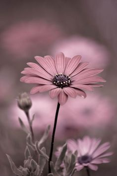 flowers photography Oops~A~Daisy Flowers Nature, My Flower, Pretty Flowers, Flower Art, Pink Flowers, Beautiful Flowers Wallpapers, Beautiful Nature Wallpaper, Pretty Wallpapers, Sunflower Wallpaper