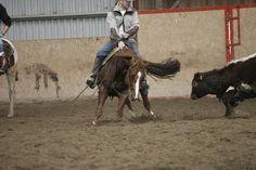cutting horse training North Orava Cutting Horses