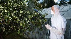 : Опрыскивание плодовых деревьев от болезней и вредителей