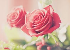 Photograph rose by Dominika  on 500px