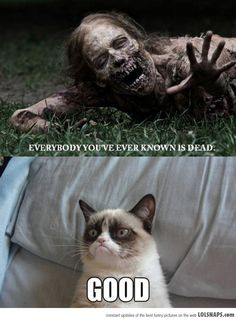 Grumpy Cat doesn't care about anything in  life or the after life