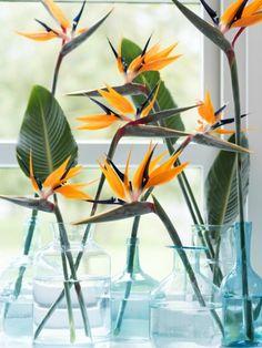 #Strelitzia inspiratie op de #bloemenwijzer op de site van Mooiwabloemendoen.nl