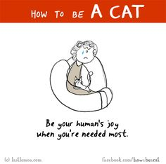 HOW TO BE A CAT: Be your human's joy when you're needed most.