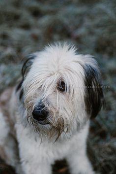 Mio   Tier Fotografie   dog photography   from bernadetteburnett.com