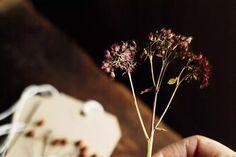 GILLAdvent-281474 Make An Advent Calendar, Christmas Cards, Christmas Decorations, Floral Theme, Dried Flowers, Dandelion, Make It Yourself, Plants, Christmas E Cards