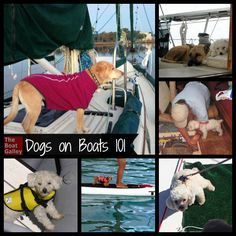 Dogs on Boats Thinking of taking your dog on your boat? Or considering getting one and wondering about the realities? Tips to make it a great experience for you and your best friend! Sailboat Living, Living On A Boat, Cool Boats, Small Boats, Dogs On Boats, Boating Tips, Boat Insurance, Boat Decor, Sailing Trips