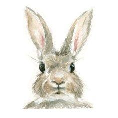 Aquarell Hase Kaninchen Print Bunny Print Animal Print - Malerei Kunst Source by pasternakpetra Watercolor Animals, Watercolor Print, Watercolor Paintings, Watercolors, Easy Watercolor, Art Paintings, Jack Rabbit, Rabbit Art, Bunny Rabbit