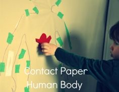 Contact Paper Human Body to Learn about the Major Bones and Organs Contact Paper, Tot School, To Infinity And Beyond, Fun Learning, Human Body, Kids Playing, Fun Crafts, Activities For Kids, Stuff To Do