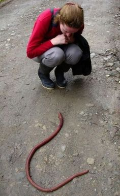 Collection of unbelivable not photoshopped photographs   That is an earth worm!