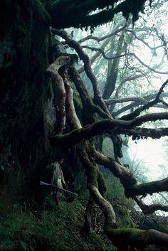 The mystery of trees. Honey Hunters of Nepal. http://www.visualnews.com/2012/06/04/the-honey-hunters-of-nepal/#
