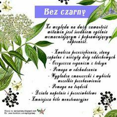 Natural Medicine, Life Hacks, Herbs, Healthy Recipes, Food, Therapy, Diet, Health, Essen