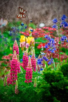 Lupin Flowers | Amazing Travel Pictures - Amazing Pictures, Images, Photography from Travels All Aronud the World