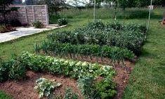 Beautiful garden.  Strategies for the Small Vegetable Garden | Garden Guides