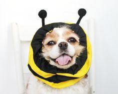 Ape di Gaden cane Snood. Lo snood adorabile specialità con strisce nere e gialle con poco sentito dellantenna. Il tessuto è in cotone 100%. Per favore lavare a mano tutti gli Snood orecchie per tenere le orecchie o antenna in modo che tenere in piedi e il feltro in buone condizioni!  Si prega di tenere sempre il vostro animale domestico sotto controllo mentre indossa la snood.  * Il Cavalier nella foto è di 15 a 20 kg e indossando un mezzo per riferimento.  Questi Snood sono realizzati su…