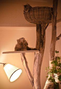 """***Absolument Génial!!!!! (et tellement beau!...contrairement aux """"arbres à chats à moquette"""" affreux!!!)"""