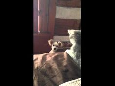 Cute Game of Whack-a-Mole Between a Kitten and Puppy - Cheezburger