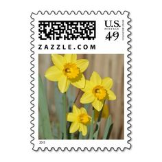 Yellow Daffodil Flowers Postage Stamp