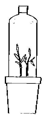 Portal da Horticultura