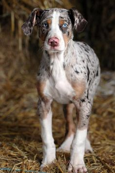 I think this is a german shorthand pointer