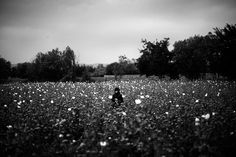 """A girl stands in the middle of a poppy field as Marines pass by on patrol. From the story """"In Afghanistan, Flowers Call The Shots"""", 2011."""