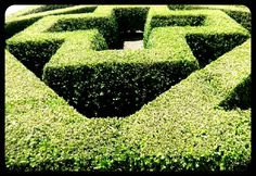 A hedge for you.
