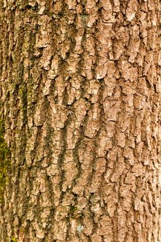 Branch Tree Bark Texture - Pattern Pictures, Free Photos, Free Textures, Free Repetition Pattern Photography