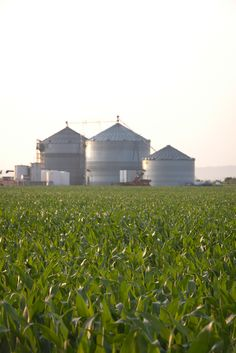 A scenic view of the grain bins on the farm. Want to learn more about agriculture and farming? Visit: FindOurCommonGround.com.