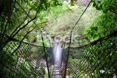 A Swinging Rope Bridge in the Abel Tasman National Park, New Zealand. Deep Photos, Abel Tasman National Park, Rope Bridge, Types Of Cameras, Travel And Tourism, Visual Communication, New Zealand, Paths, National Parks