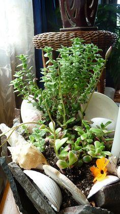 Indoor plants and shells.....3