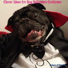 Clever Ideas for Dog Halloween Costumes - Fidose of Reality Halloween Costume Contest, Halloween Kids, Halloween Party, Dog Crafts, Pet Costumes, Puppy Pictures, Cool Pets, Diy Stuffed Animals, Pet Clothes