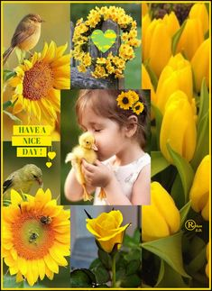 '' Spring Yellow '' by Reyhan S.D. Beautiful Collage, Beautiful Images, Beautiful Day, Beautiful Flowers, I Need A Hobby, Good Morning Ladies, Montreal Botanical Garden, Color Collage, Winter Painting