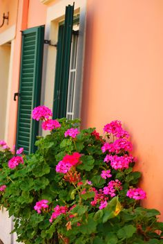 Pink Geraniums in window box in Corfu Greece.  Photo by Julie Conway