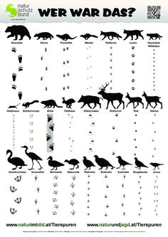 Animal traces identification sheet, traces of 25 domestic wild animals. www. - Animal traces identification sheet, traces of 25 domestic wild animals. www.