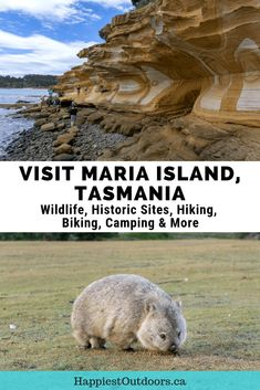Your guide to visiting Maria Island, Tasmania, Australia. It's the best place in Tasmania to see wildlife including wombats, wallabies, pademelons, kangaroos and Tasmanian devils. It also has one of Tasmania's most intact convict historical sites, Darlington Probation Station. If you love the outdoors, you'll love the hiking, biking and camping too. #MariaIsland #Tasmania #Australia