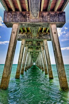 Under the Boardwalk Venice Fishing Pier in Florida. Venice is known worldwide as the Shark Tooth Capital. Shark teeth are easily found and collected along it's beautiful beaches. They may be black, brown, or gray, depending on the minerals in the soil in which they have been buried. Photo by: Kay Gaensler/flickr