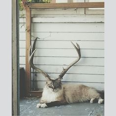 My cat lined up perfectly with the deer skull on my porch! - Imgur