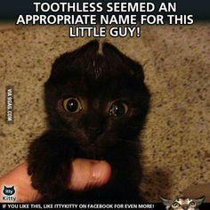 Cute Animal Memes, Funny Animal Quotes, Animal Jokes, Cute Animal Pictures, Cute Funny Animals, Cute Cats, Funny Pictures, School Pictures, Sports Pictures