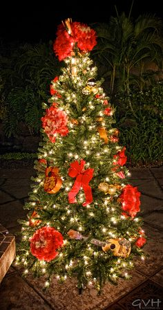 I can't wait to have a Hawaiian Christmas Tree next year!