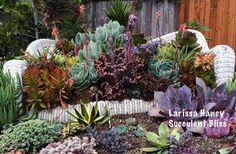 Beautiful and creative succulent garden by Larissa Yates Haney