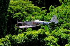 """""""A Japanese Mitsubishi Zero fighter aircraft from World War Two stuck in a tree in Papua New Guinea Ww2 Aircraft, Military Aircraft, Old Planes, Photos Originales, Papua New Guinea, World War Two, Abandoned Places, Wwii, Air Force"""