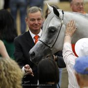 Arabhorse.com - Arabian Breeders World Cup