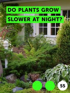Do Plants Grow Slower at Night?. Simply stated, plants do not grow any slower at night than they do during the day.  Plants do stop photosynthesizing at night, but the act of respiration, which is how plants create energy and grow, continues at night at more or less the same level as it does during the day, or even faster.