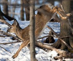 Deer Hunting Tips: What Fawn Behavior Can Tell You About the Rut | Outdoor Life