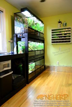 New England Herpetoculture LLC - Crested & Gargoyle Gecko Care Guide