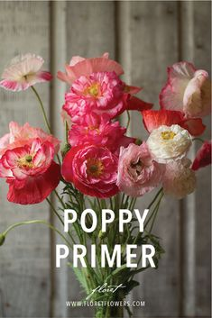 When it comes to poppies, there always seems to be a great deal of confusion surrounding the different types, their growing needs, and whether or not they can be used for flower arranging. We thought it might be helpful to break down the four different types of seed-grown poppies that are most commonly grown for cut flowers and explain what makes them different and special. #floret #growfloret #poppies