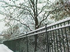 snow snow snow (: