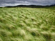 Beach Grass Photo, Nature Wallpaper – National Geographic Photo of the Day