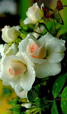 ❝ Tenha flores nas mãos, verdade no olhar, amor no coração e muita alegria para que a vida te retribua com dias cheios de paz. ❞  (Rosi Coelho)